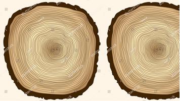 Construir con madera: El secreto para la construcción CO2 negativo